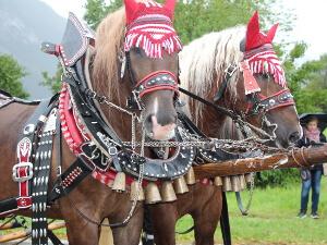 Georgiritt Ruhpolding: geschmückte Pferde